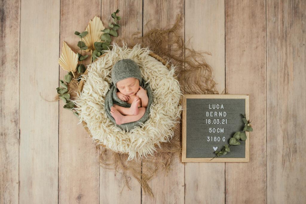 Baby Eukalyptus Trockenblumen Petrol